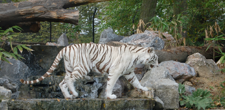 La presse en parle : «  240 enfants de la Sauvegarde du Nord en sortie au zoo de Maubeuge»